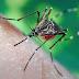 La Eficiencia de la Picadura del Mosquito