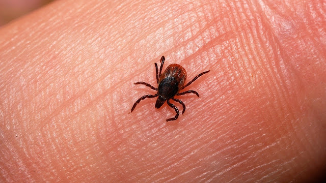 A small tick on a human hand