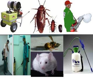شركة مكافحة حشرات ورش مبيدات بالاحساء