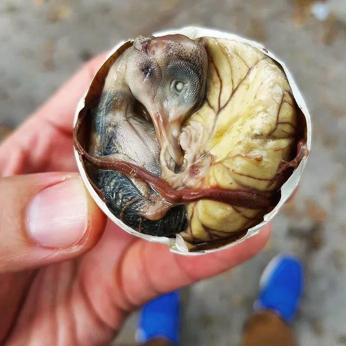 21 Extraordinary Pictures Of National Foods That Seem Uncanny To The Rest Of The World - Balut, Philippines
