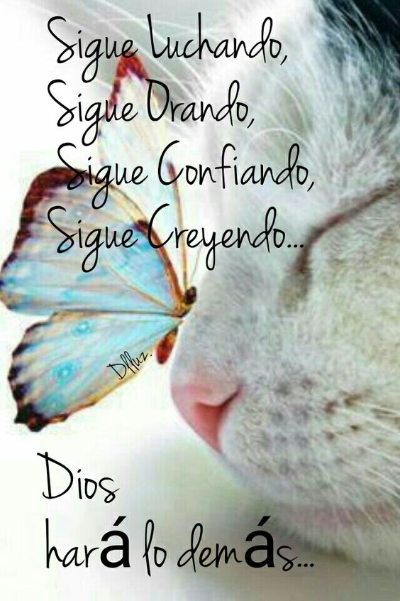 Sigue luchando