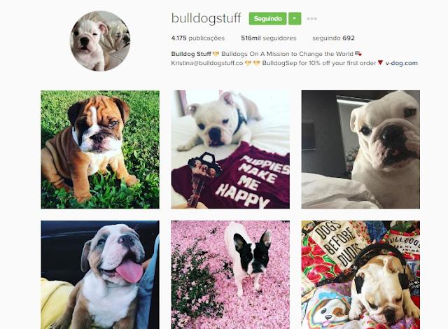 Os Cães Mais Lindos do Instagram Parte 1
