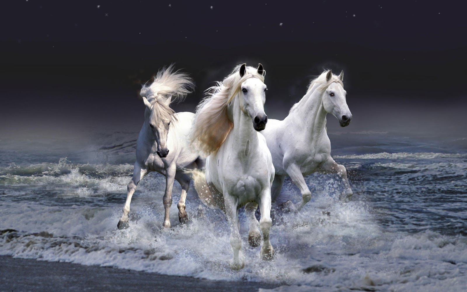 Download   Wallpaper Horse Water - Horse-+(3)  Collection_142279.jpeg