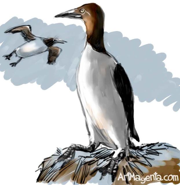 Murre sketch painting. Bird art drawing by illustrator Artmagenta.