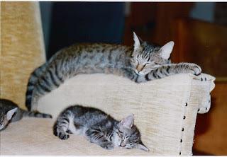 gatti poltrona