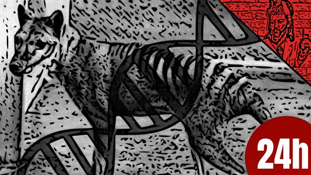 QN NEWS 24h - Genoma de Tigre da Tasmânia e pistas de sua extinção
