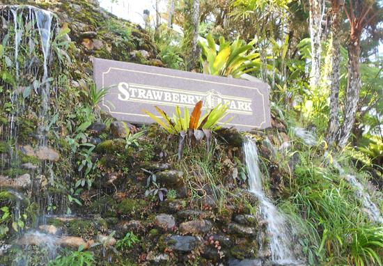 Strawberry Park Resort, Cameron Highlands