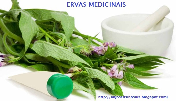 Ervas medicinais.medicina alternativa.