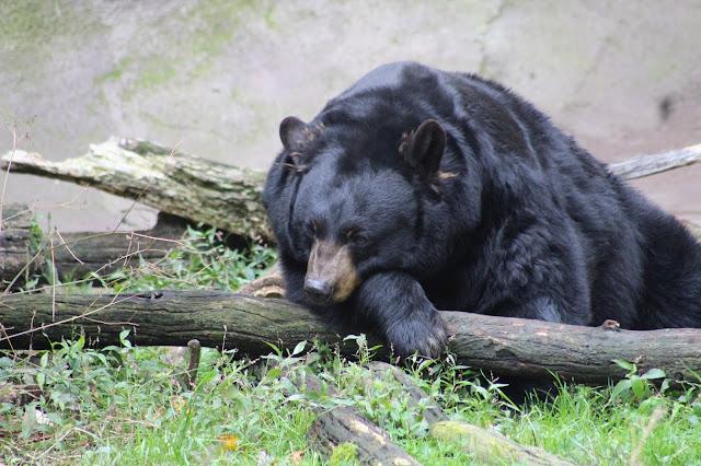 Ober Gatlinburg Wildlife Encounter