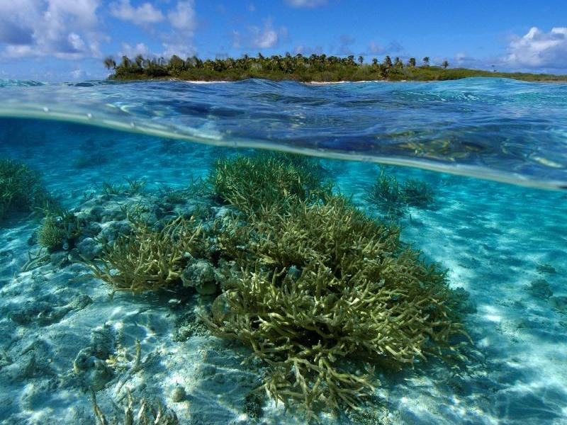 Marine Biome Climate