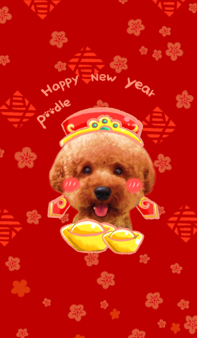 A cute poodle dog!Happy new year!