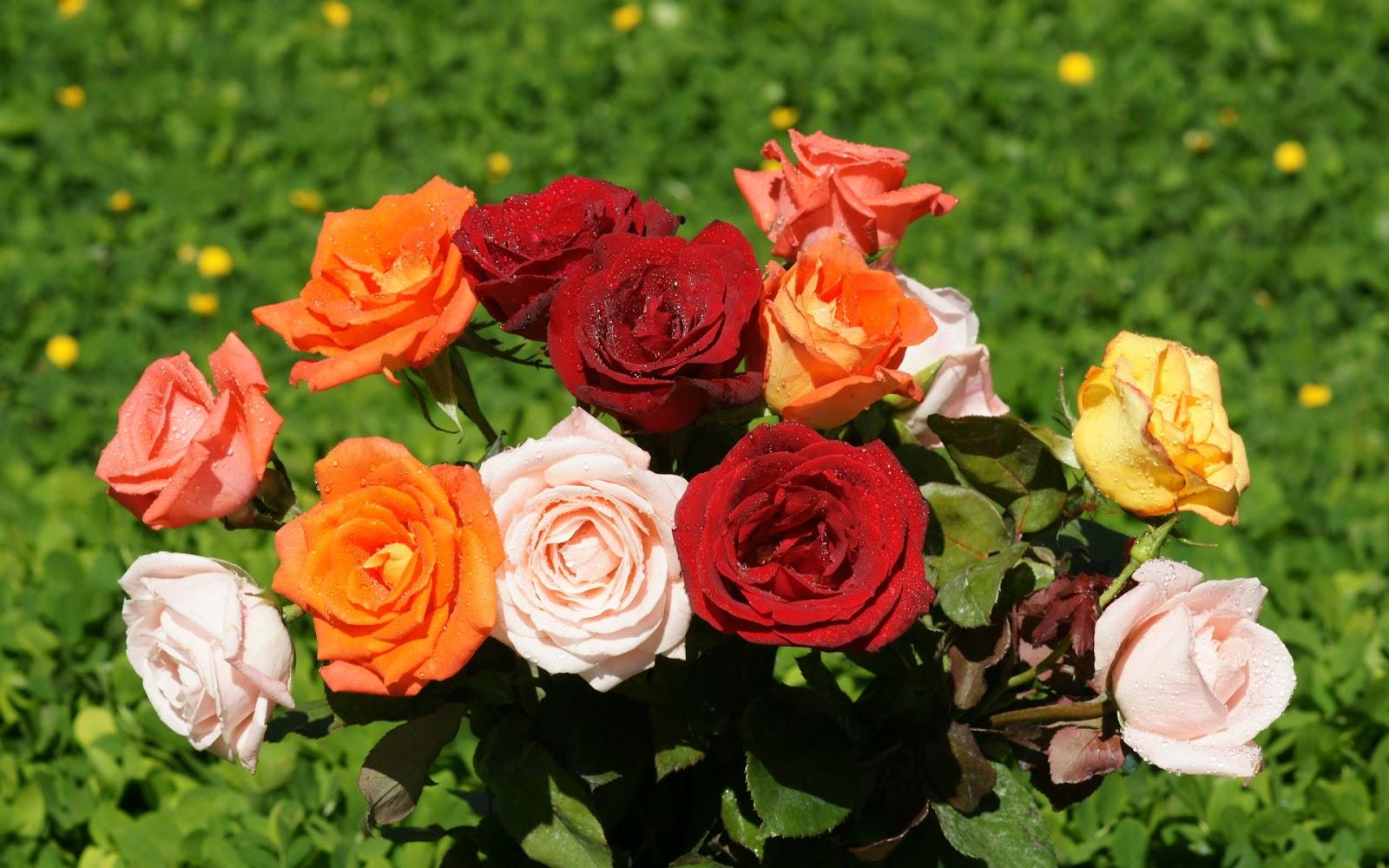Vậy những ai yêu thích hoa hồng hãy thường xuyên ghé thăm để chiêm ngưỡng những hình ảnh đẹp nhất về loài hoa này.