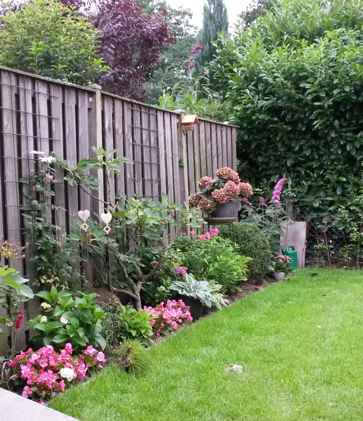 kiekplaotiesenzo eigen tuin in augustus On eigen tuin