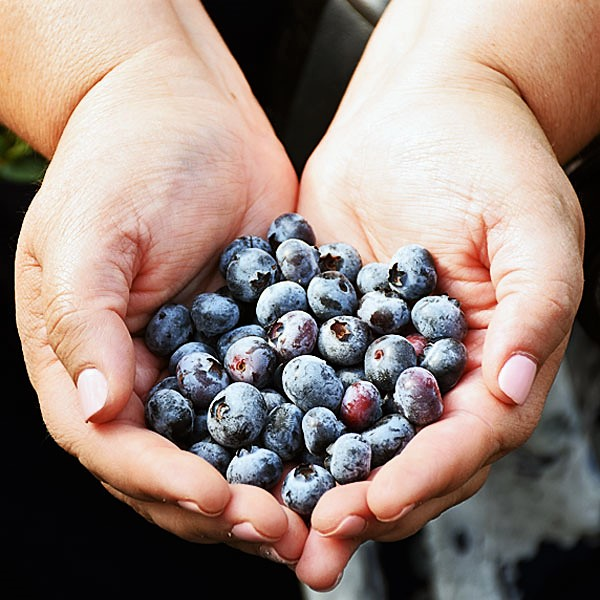 Organic blueberries I used in my blueberry dump cake from the Wish Farms blueberry farm in FL