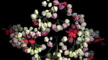 Fotografías de flores sobre fondo negro con Laurie Tennent Botanicals