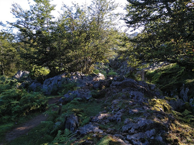 Bosque de Monte Palomberu