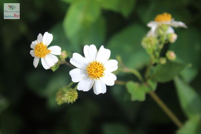 Chiêm ngưỡng vẻ đẹp hoa đà lạt ở Làng hoa Vạn Thành