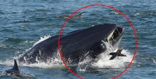 Τον κατάπιε φάλαινα αλλά κατάφερε να βγει από το στόμα της -Περιγράφει πώς ήταν στο στομάχι της ΒΙΝΤΕΟ