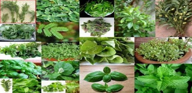 Αυτές είναι οι ασθένειες που θεραπεύει κάθε βότανο – Δείτε τον πλήρη οδηγό