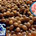 Elimina de raiz los parásitos intestinales y las amebas usando estas recetas caseras