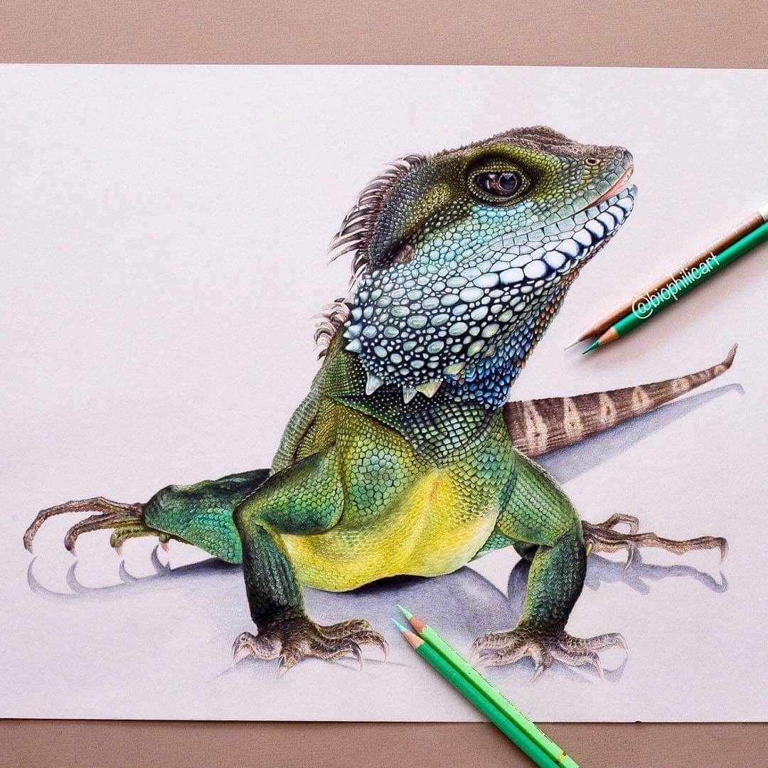 06-Water-Dragon-Sallyann-Brightly-Colored-Animal-Pencil-Drawings-www-designstack-co