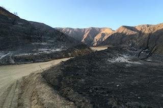 Fish Fire damage along Van Tassel Fire Road with Van Tassel Ridge in the background, Azusa, June 30, 2016
