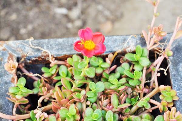 Nikon photo red flowers