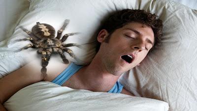 ناكل 4 عناكب أثناء النوم