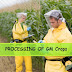 The Benefits of GM Crops for Farmers and Consumers