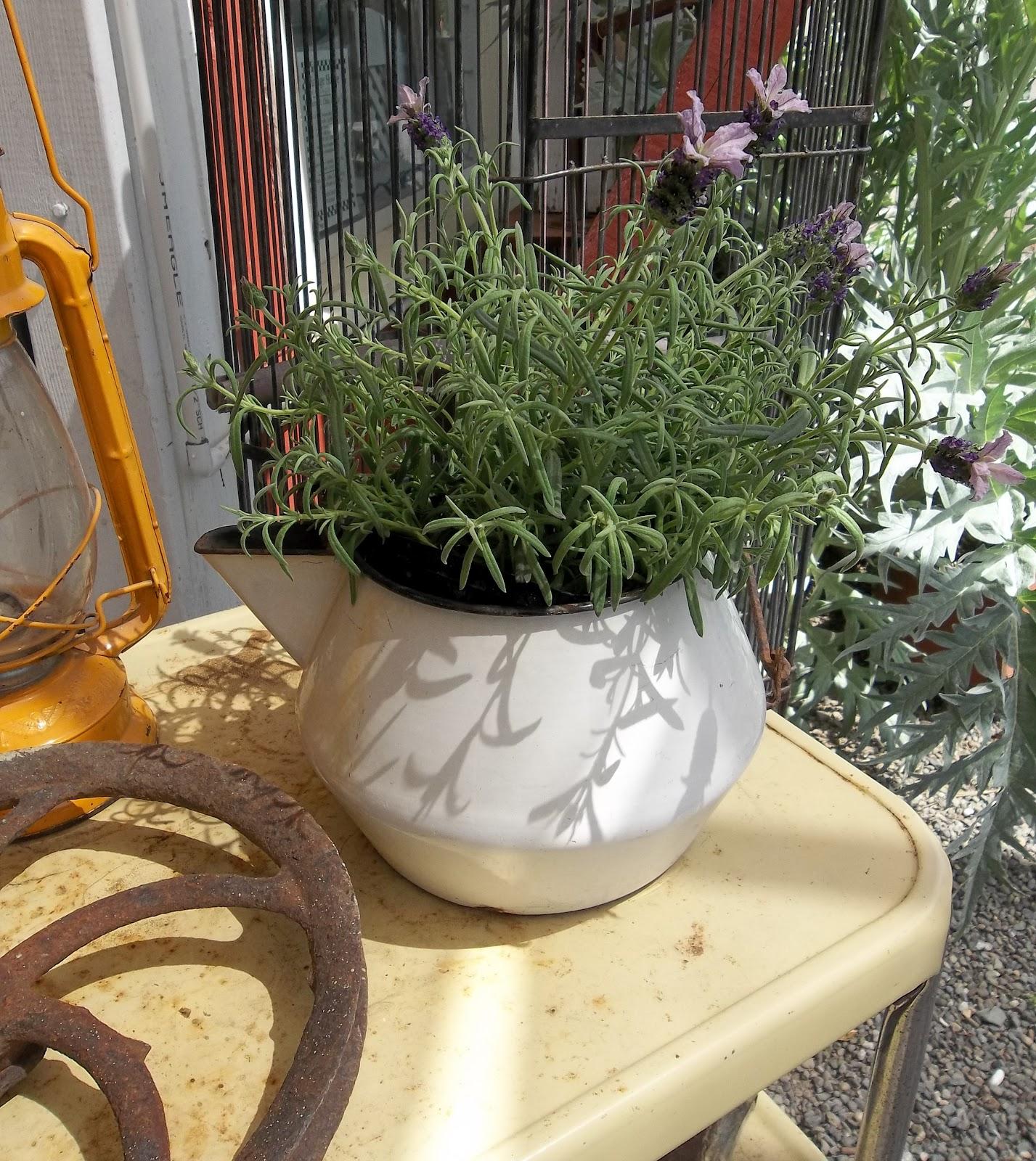 Container Gardening Ideas: Gin'Gilli's Vintage Home: Unique Container Gardening Ideas