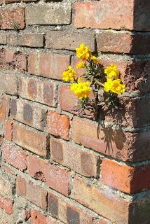 bunga dan tembok