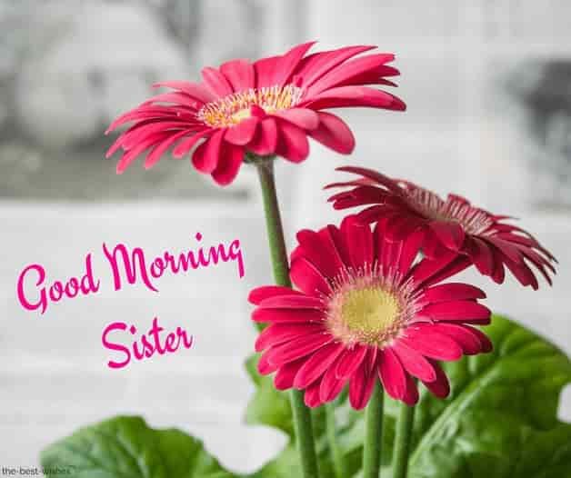 good morning sister