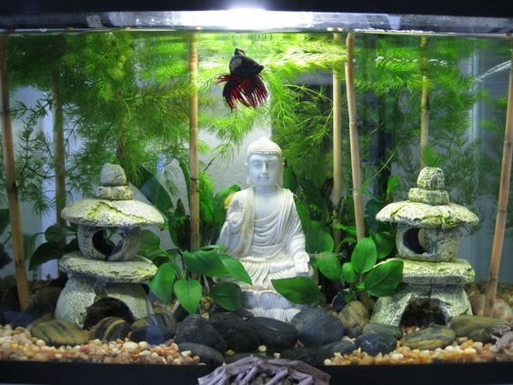 Bạn nghĩ có nên mang tượng phật vào bể thủy sinh?
