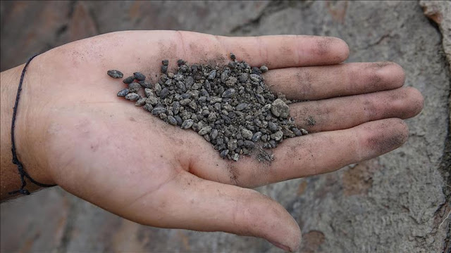 2,800-year-old seeds found in ancient Armenian fortress to be resurrected