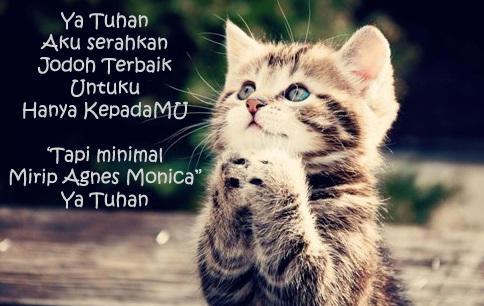 gambar meme kucing sedang berdoa