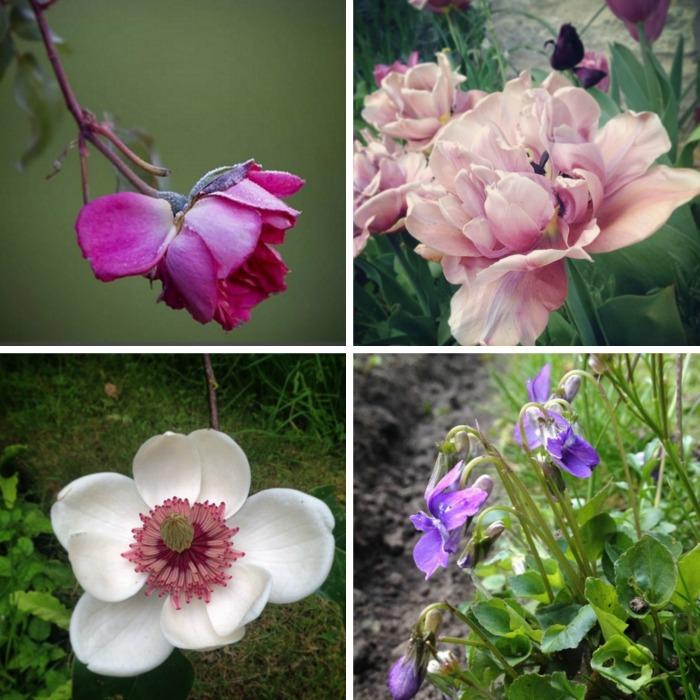 Jardines plantas y flores en instagram guia de jardin for Guia de plantas de jardin
