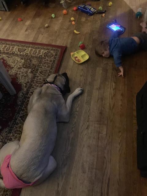 Giant Dog Breeds