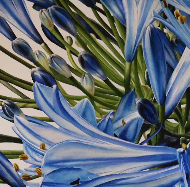Detail of the Blue Agapanthus botanical painting