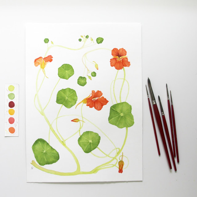nasturtiums, paintings, watercolor, botanical watercolor, nasturtium watercolor, nasturtium painting, Anne Butera, My Giant Strawberry,