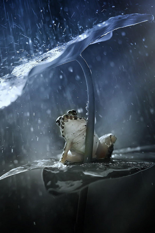 Frog in Rain beautiful image