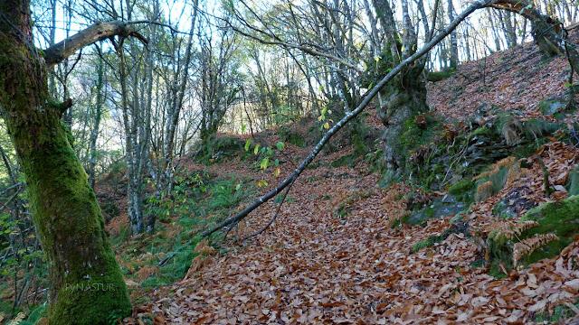 Castañeru en la Ruta del Silencio - Asturias