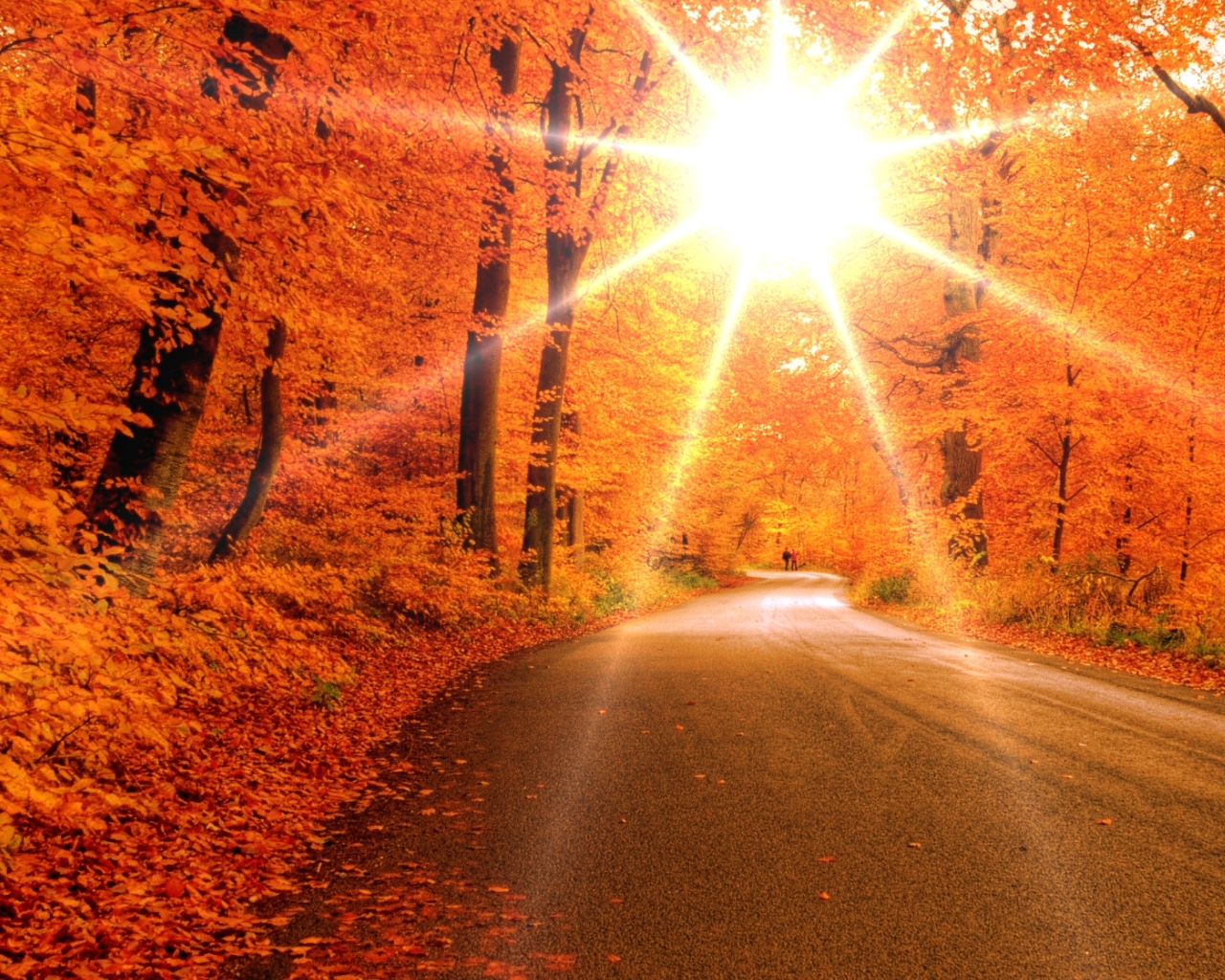 Free Fall Bc Nature Wallpaper Cool Funny Pictures Wonderful Autumn Road Wallpapers