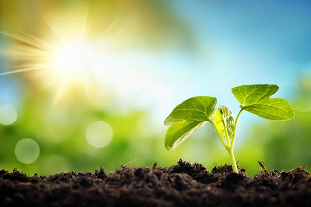 bahan bakar cair baru dengan memanfaatkan bakteri untuk memanen sinar matahari