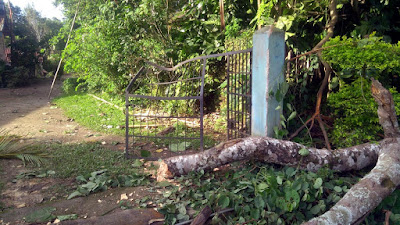 Fallen baniyan tree mungpoo effects gate