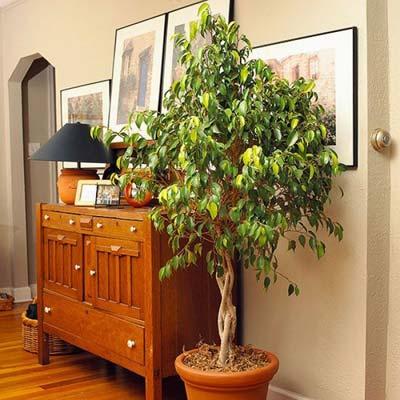 Image result for tanaman dalam rumah