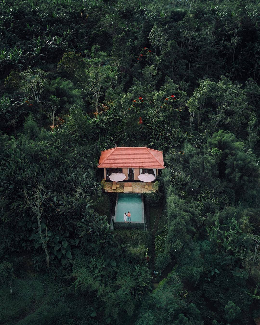 bali-jungle