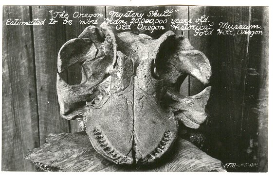 The 20000000 year old Mystery Skull of Oregon