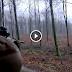 des jolis tirs - chasse aux sangliers