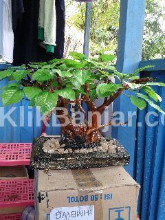 jasa kerajinan tangan hias bonsai untuk interior ruangan bjb