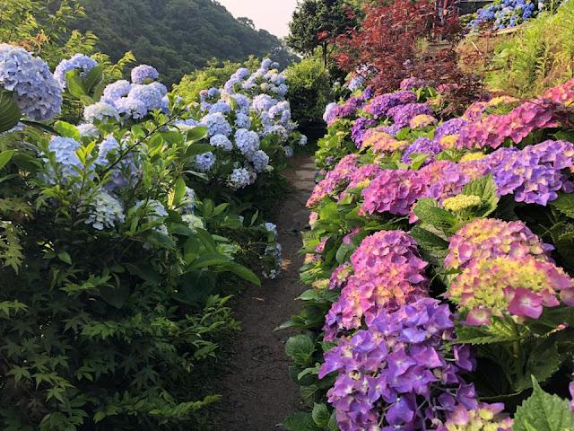 大梯田花卉農場
